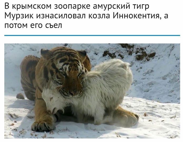 Фейковая новость про козла Иннокентия и тигра Мурзика